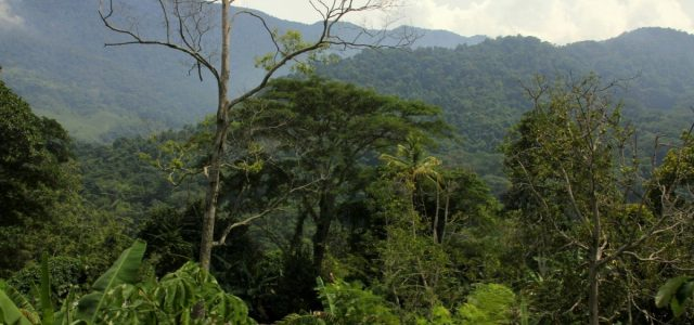 Dżungla i ptaki czyli Henry Pittier National Park