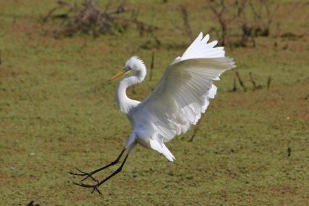 Keoladeo – ptasi raj koło Agry