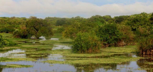 Llanos – kraina wielkiej wody, część I