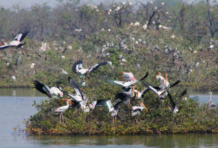 Vedanthangal i Vadanemelli – ptaki i krokodyle