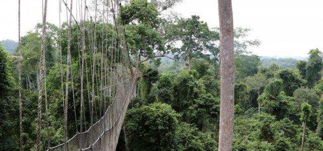 Kakum NP – spacer w koronach drzew