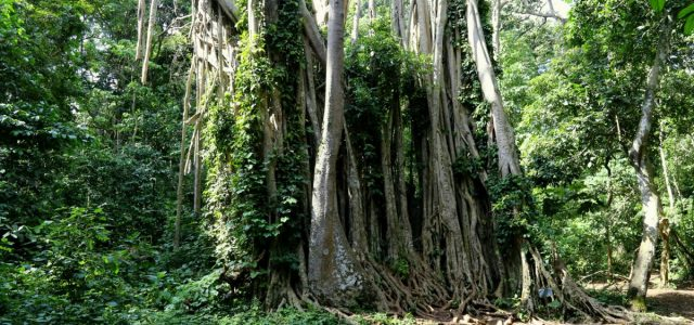 Małpy i wodospady. Baobang Fiema. Boti Falls
