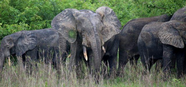 Mole NP – spacery pośród słoni