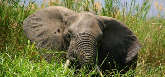 Na rzece Shire pośród słoni i hipopotamów