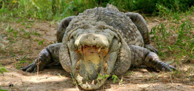Paga Paga & Tongo Hills. Święte krokodyle i jeszcze bardziej święte wzgórza.