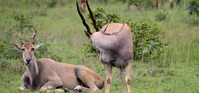 Sarakawa – nieoczekiwane safari