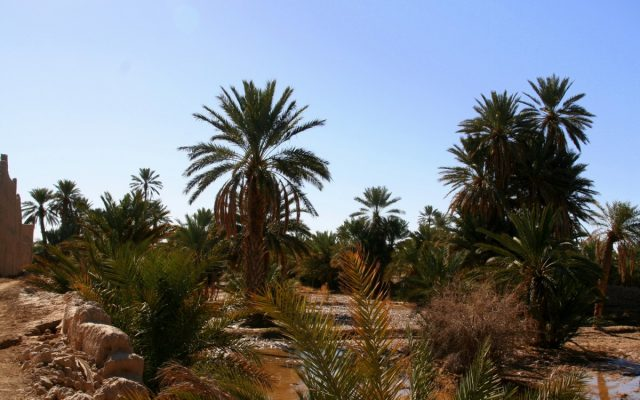 Tafilalt. Stąd do Timbuktu