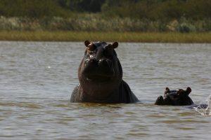 Ziway – w poszukiwaniu hipopotamów